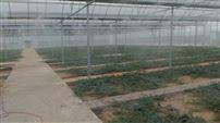 植物种植园喷雾降温