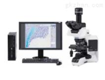 奥林巴斯显微镜BX53(正置/荧光/相差)