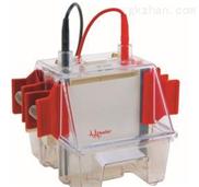 小型垂直电泳仪SE260