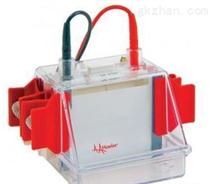 小型垂直电泳仪SE250