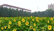 第三屆中國(國際)智慧養殖應用與創新發展高峰論壇即將舉行