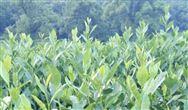 中國農民豐收節組織指導委員會全體會議在京召開